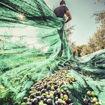 Imagen de Malla protección arboles frutales 10X10 metros Karpatools